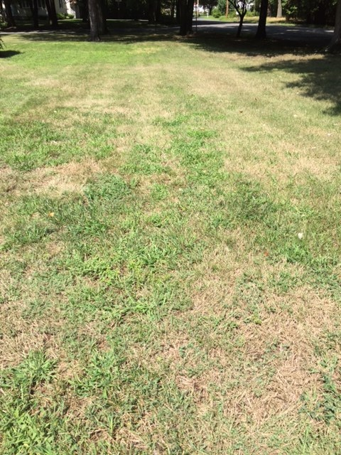 lawn with missing grass, ready to be overeeded
