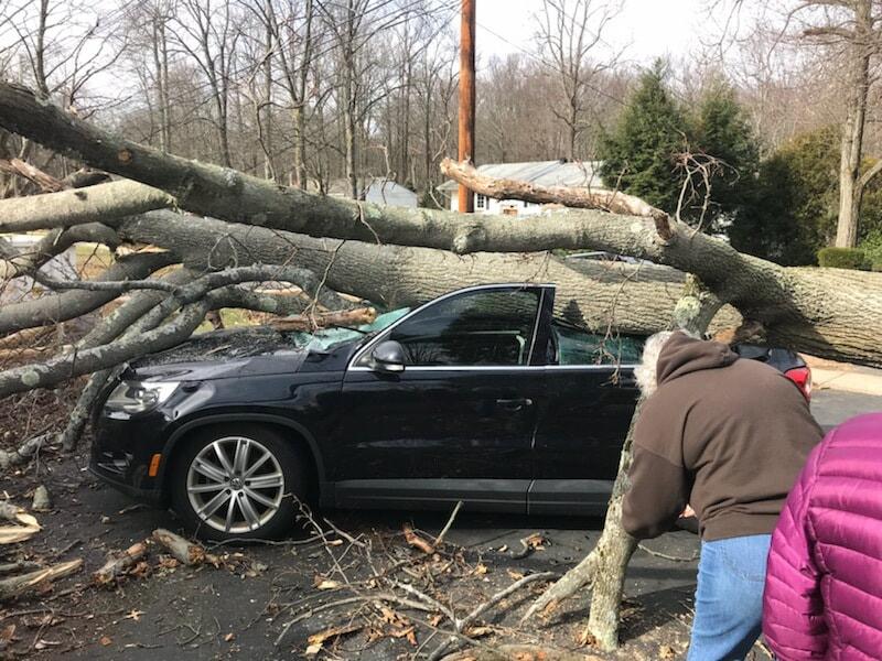 tree fell on car and needs emergency tree service