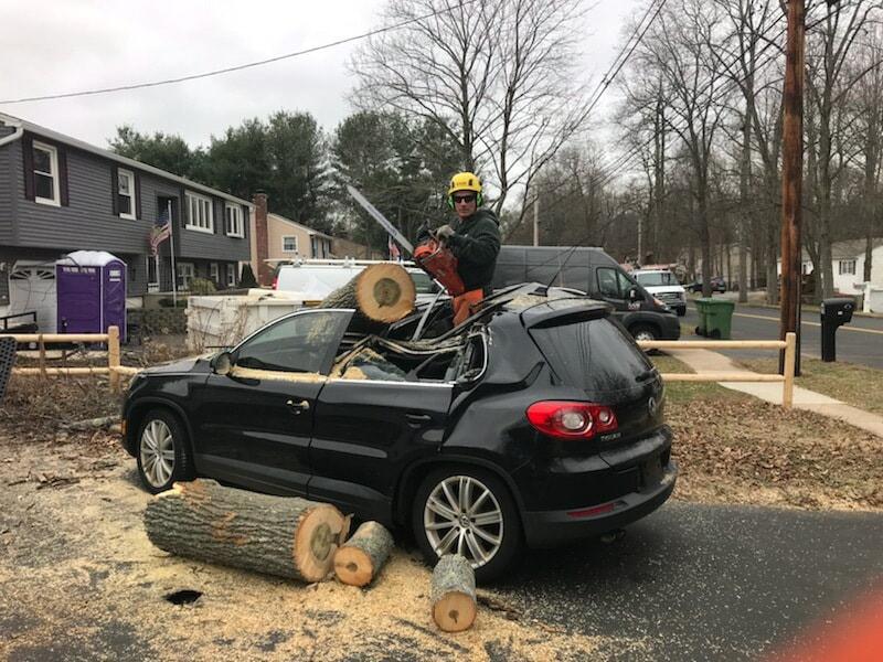 White oak removing a tree that had fallen on a car