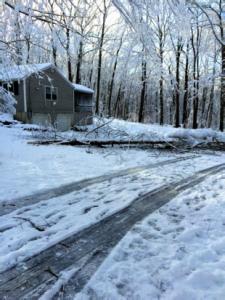 fallen tree from a winter storm