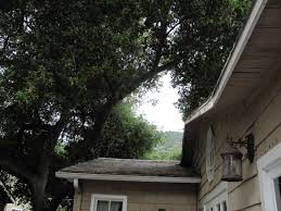 tree branches hanging over a house