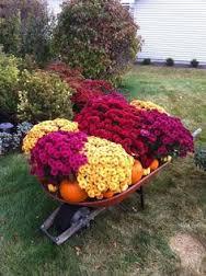 beautiful fall flowers