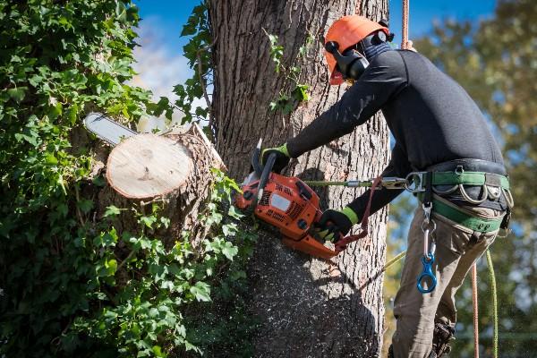 Tree Service Employee cutting a tree