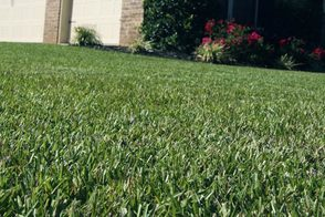 beautiful sod giving the yard a vibrant look